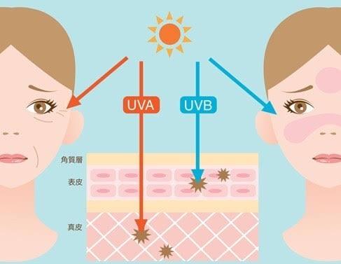 img 6825 - 紫外線について
